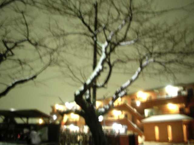 photo_080203_falling_snow.jpg