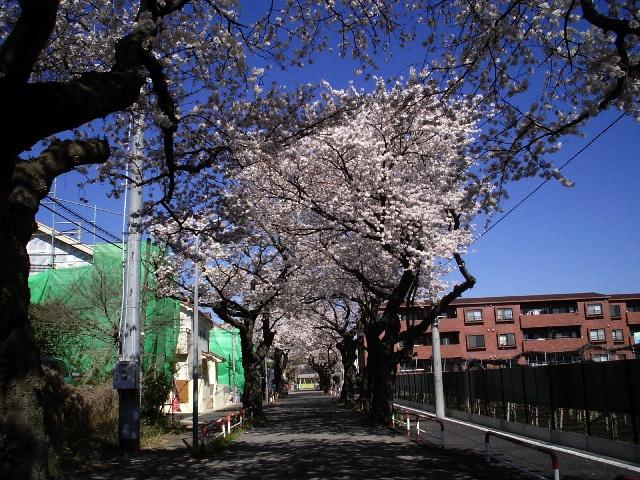 photo_080401_sakura_4.jpg