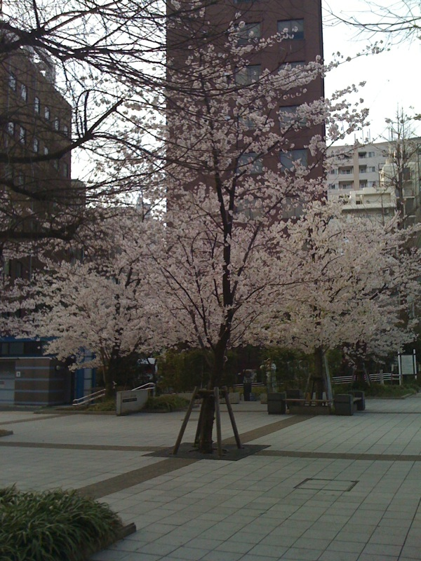 photo_100410_sakura1.jpg