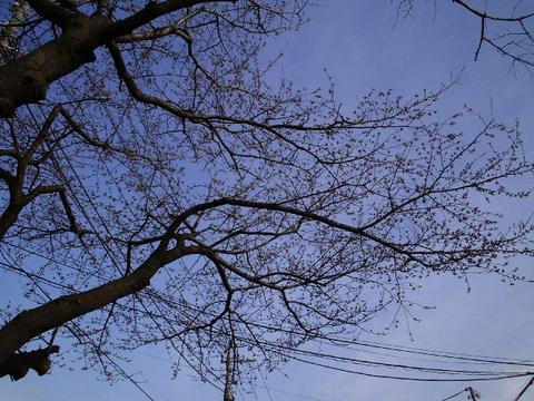 sakura_0328.jpg